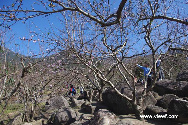 惠州.惠东御景峰国家森林公园